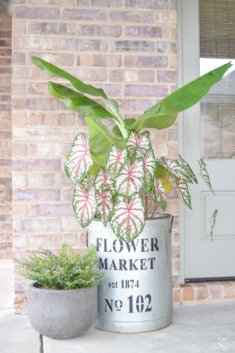banana plant flower market pot