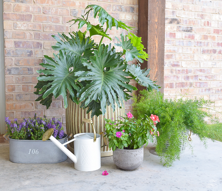 outdoor plants flowers for outdoor entertaining area