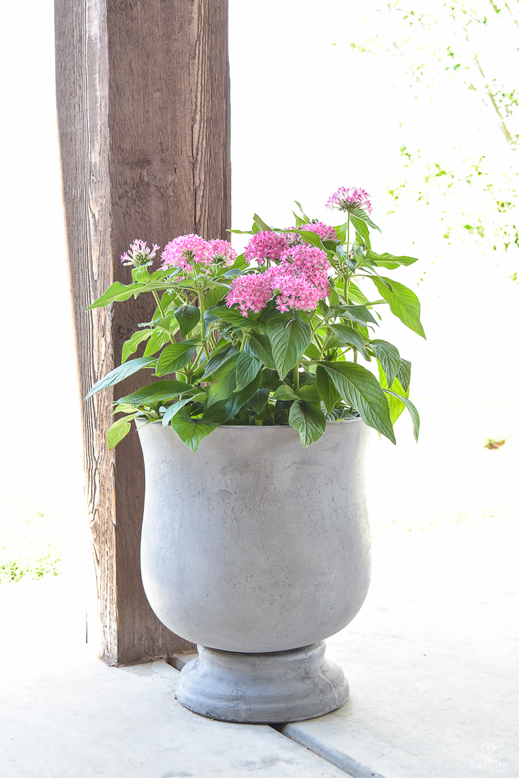 outdoor potted plant zdesign at home patio tour