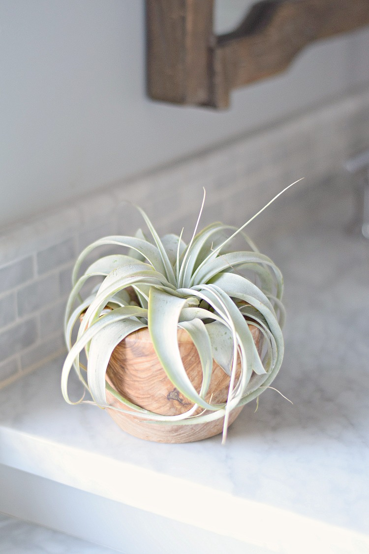 spring update tips succulent in wooden pot