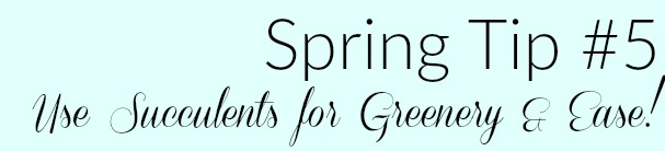 spring updating tips real and faux succulents