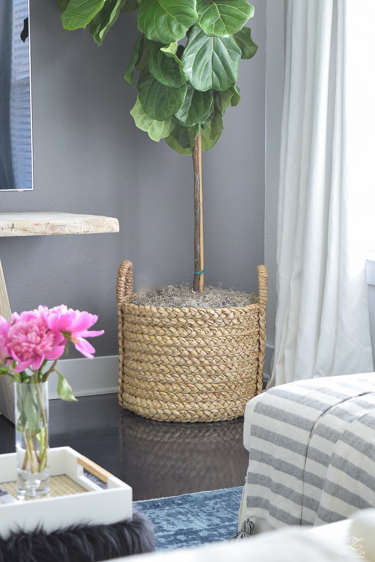 Tall Plants Houston fiddle leaf fig in pottery barn beachcomber basket with gray moss pink peonies gray accent wall-6