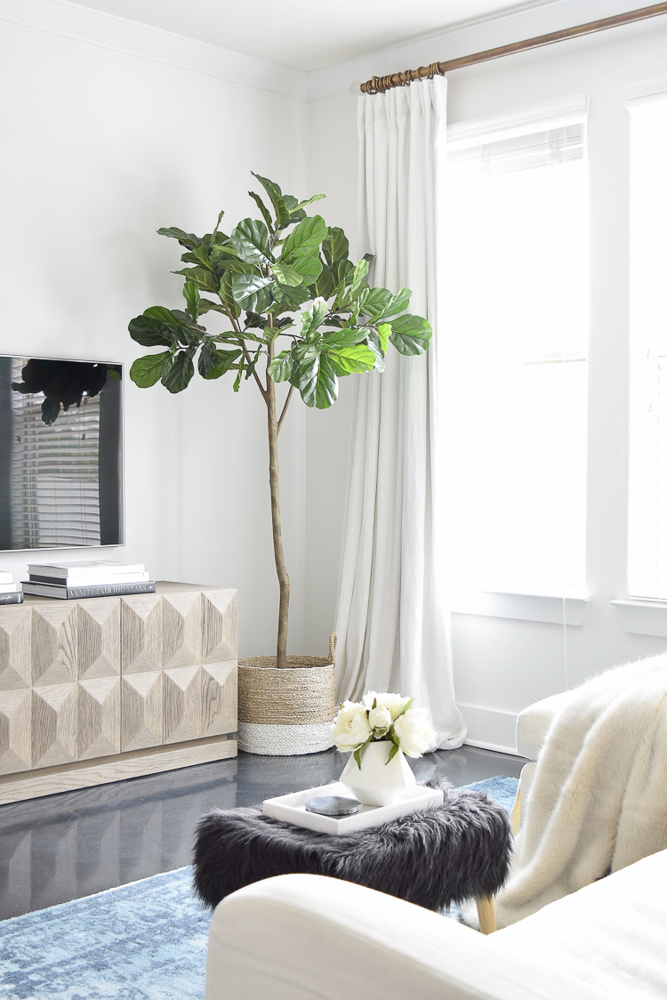 An honest review of the best fiddle leaf fig out there!