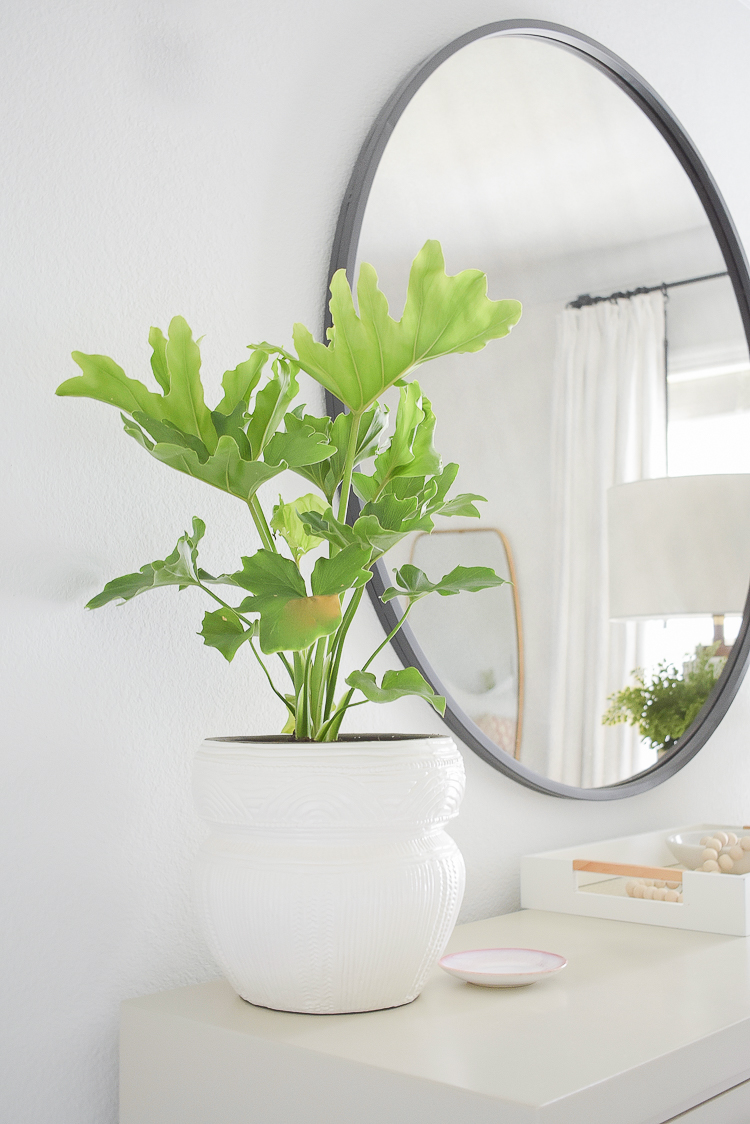 Styled for the season spring tour - modern potted house plant