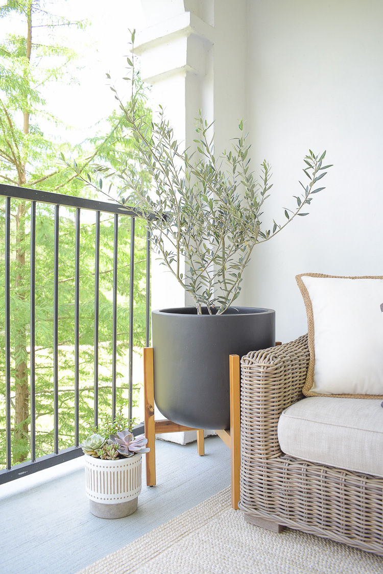 Real olive tree in modern black planter with wooden stand on modern patio refresh