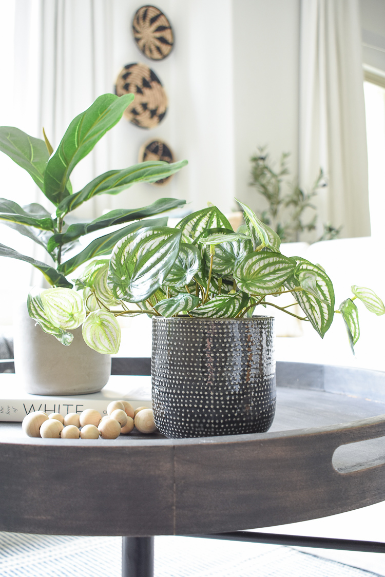 Best faux house plants - peperomia in small black ceramic pot