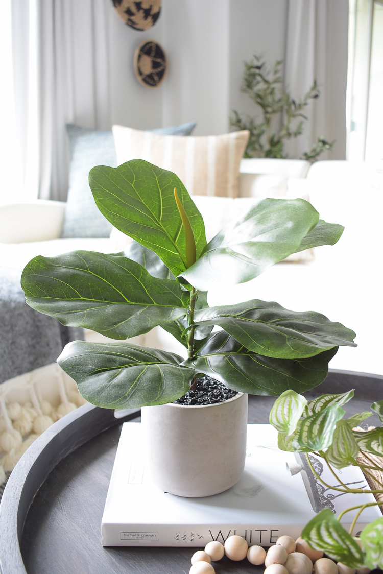 small faux realistic fig plant in cement pot
