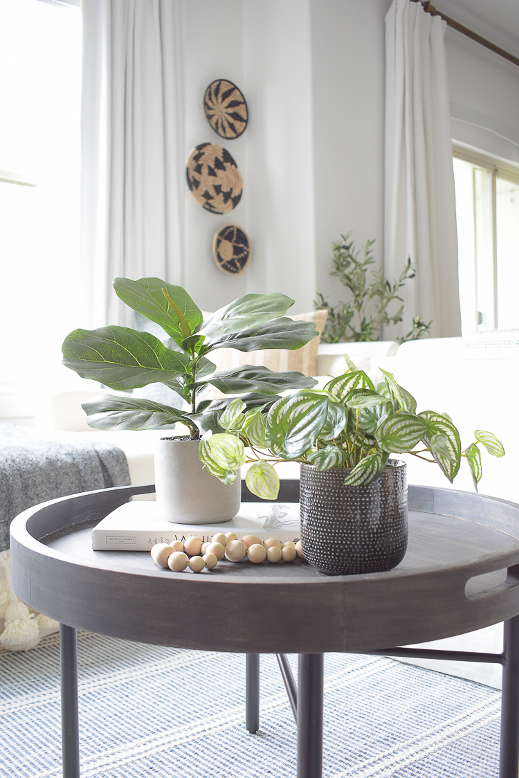 Best faux fig and peperomia plants