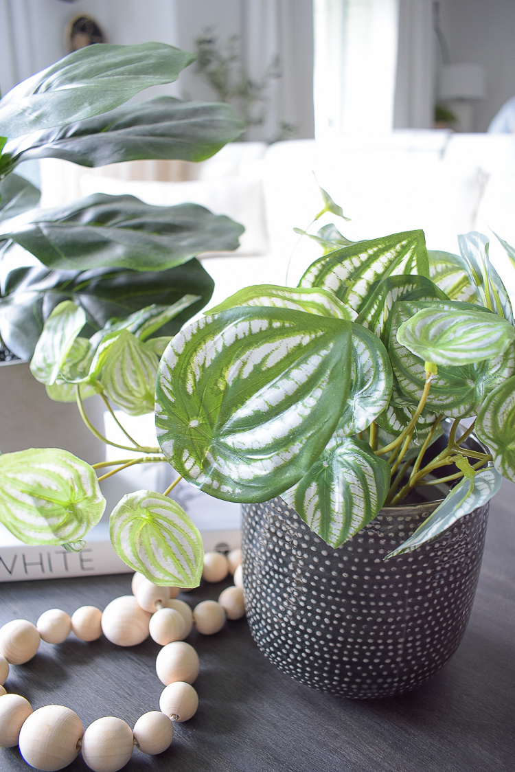 Close up of small faux peperomia plant