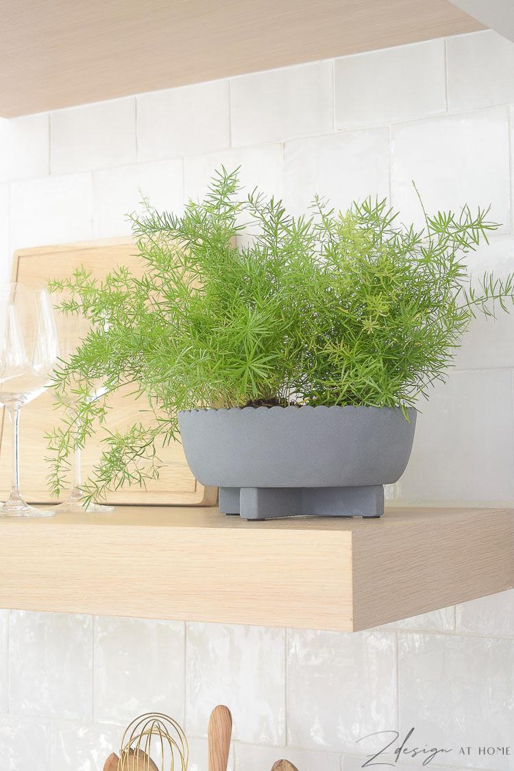 gray scalloped pop on open shelves in kitchen